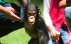 Şempanze Can