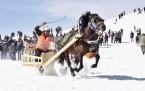 Atlı Kızak Yarışları