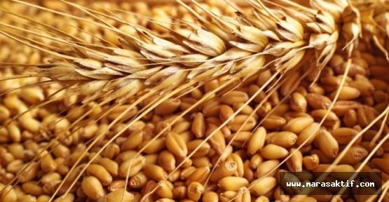 Buğday 1,08 Liradan Satıldı