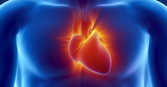 Kalbinizle İlgili Doğru Bildiğiniz Yanlışlar