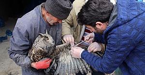 Yaralı Baykuş Tedavi Altında