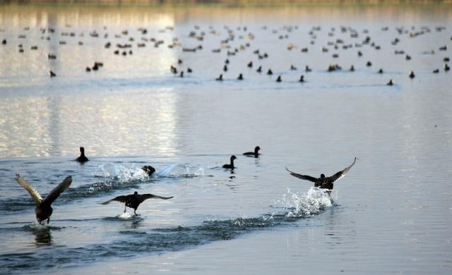 Kuşlar Gölü Şenlendirdi