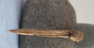 Kahramanmaraş'ta 7 Bin 500 Yıllık Biz Bulundu