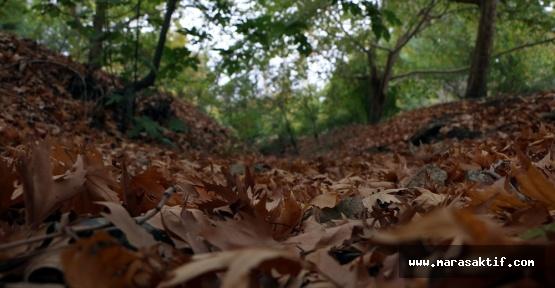 Tabiat Parkında Sonbahar Manzaraları