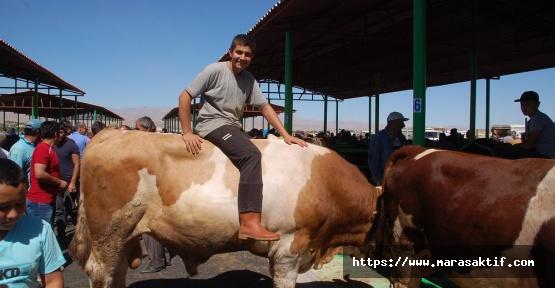 Afşin'de Otomobil Fiyatına Kurbanlık