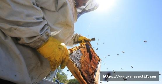 Arıcılar Umduğunu Bulamadı