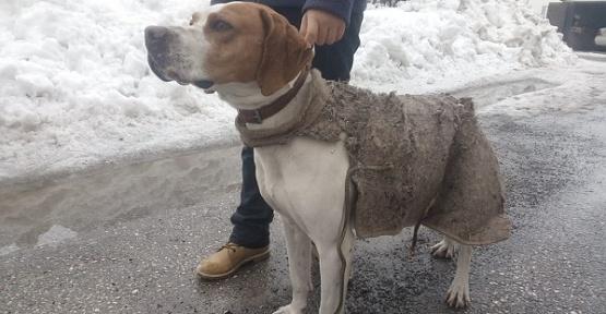Köpeğe Battaniyeden Giysi Yaptı