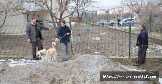 O Köpekler Barınağa Götürüldü