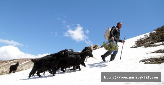 Sibirya'da Çobanların Zorlu Mesaisi