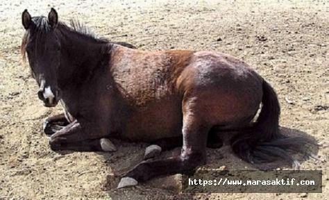 Atı Dövdü Para Cezası Aldı