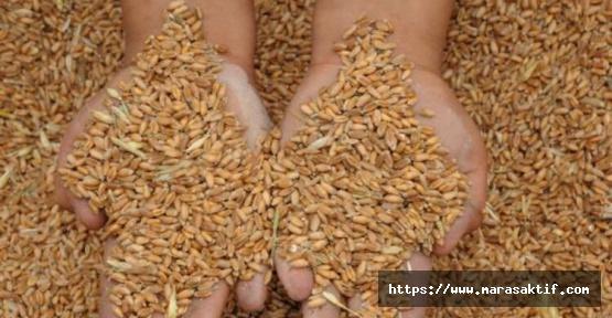 Buğday 1 Lira 39 Kuruş
