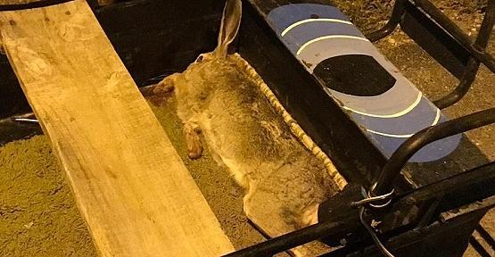 Kaçak Tavşan Avcıları Ceza Aldı