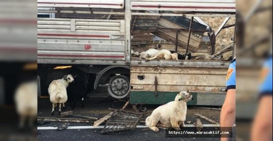Koyunlar Telef Oldu, 3 Kişi Yaralandı