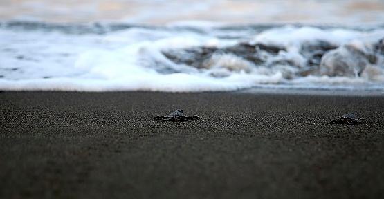 Yeşil Kaplumbağalar Denize Kavuştu