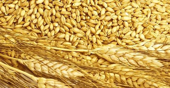 Buğday 1 Lira 50 Kuruş