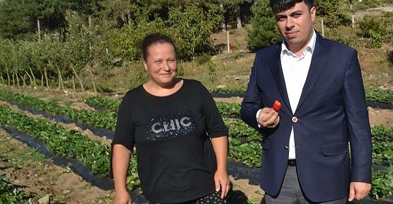 Girişimci Kadın Çilek Bahçesi Kurdu