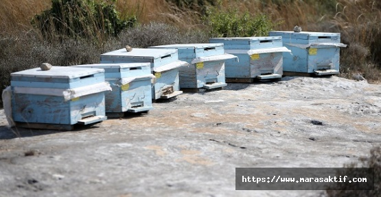 Kovan Hırsızını Arılar Öldürdü