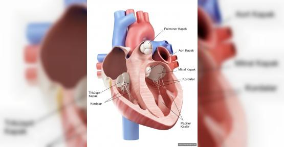 Bıçaksız Kalp Ameliyatı