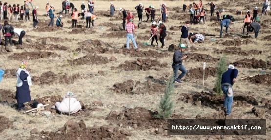 Kahramanmaraş'ta 221 Bin Fidan Dikildi