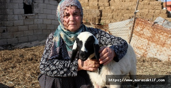 Koyunlarını Çaldılar