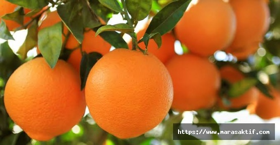Portakal 1 Lira 25 Kuruş