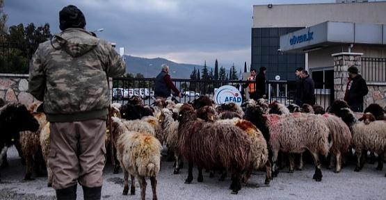 Koyunlarla Eylem Yaptılar