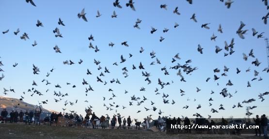 Kuşlara Antrenman Yaptırıyorlar