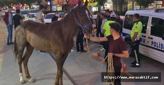 Trafikteki Atı Polis Yakaladı
