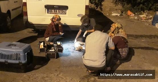 Büyükşehir'den Yaralı Kediye Yardım