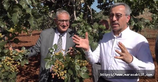 Güngör: Gaziantepliler Kıskanmasın Ama Gerçek Bu