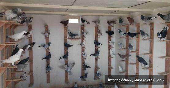 Güvercinler İçin İniş Pisti Yaptılar
