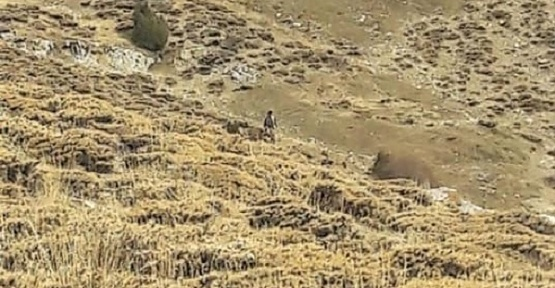 Kahramanmaraş'ta Ava Giderken Avlanıyorlar