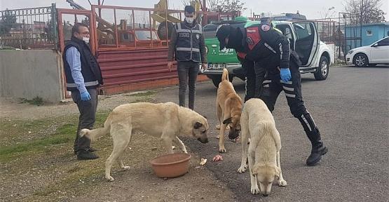 Polis Sokak Hayvanlarını Besledi