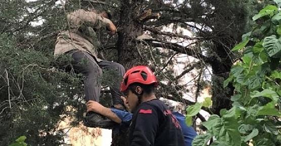 Ağaçta Fenalaştı İtfaiye Yetişti