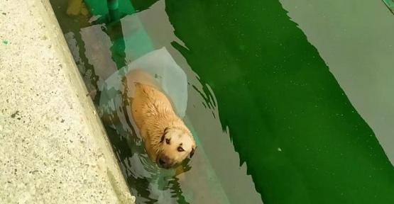 Kanala Düşen Köpek Kurtarıldı