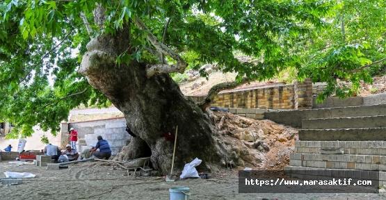 Anıt Ağaç Meydan Çalışmaları