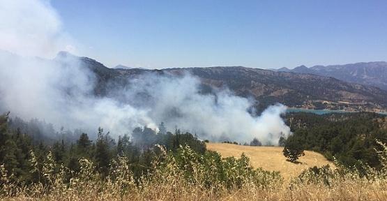 Ormanda Yangın Çıktı