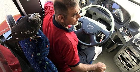 Güvercin, Kaptana Kopilotluk Yapıyor