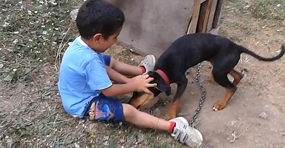 Çocuk ve Köpek İki Kadim Dost Gibiler