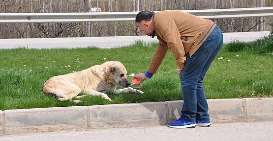 Sokak Hayvanlarını Besliyor