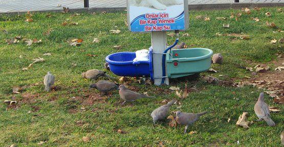 Kuşlar Aç Kalmayacak