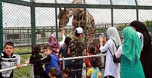 Hayvanat Bahçesinde Yoğunluk