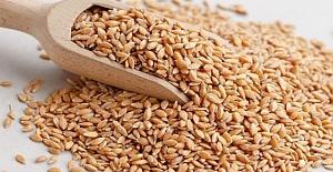 Buğday 1 Liradan Satıldı