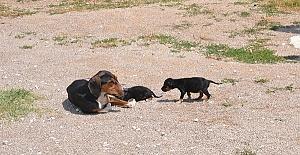 Yaralı Anne ve Yavruları Koruma Altında