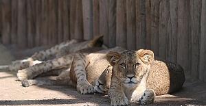 Hayvanat Bahçesi Üretim Çiftliği Gibi