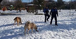 Sokak Hayvanlarına Yem Bıraktılar