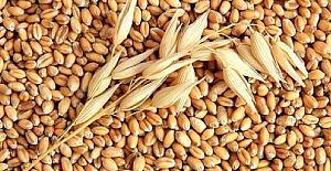 Buğday 1 Lira 49 Kuruş