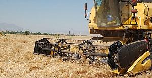 Afşin'de Buğday Hasadı Başladı
