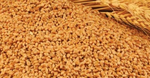 Buğday 1 Lira 44 Kuruş