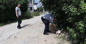 Kedi 10 Gündür Yakalanmadı